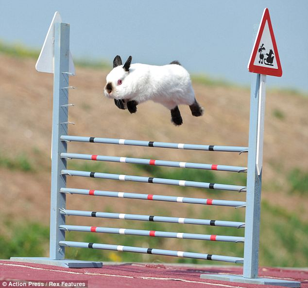 Sunday April 14th  - Unaffiliated Easter Showjumping