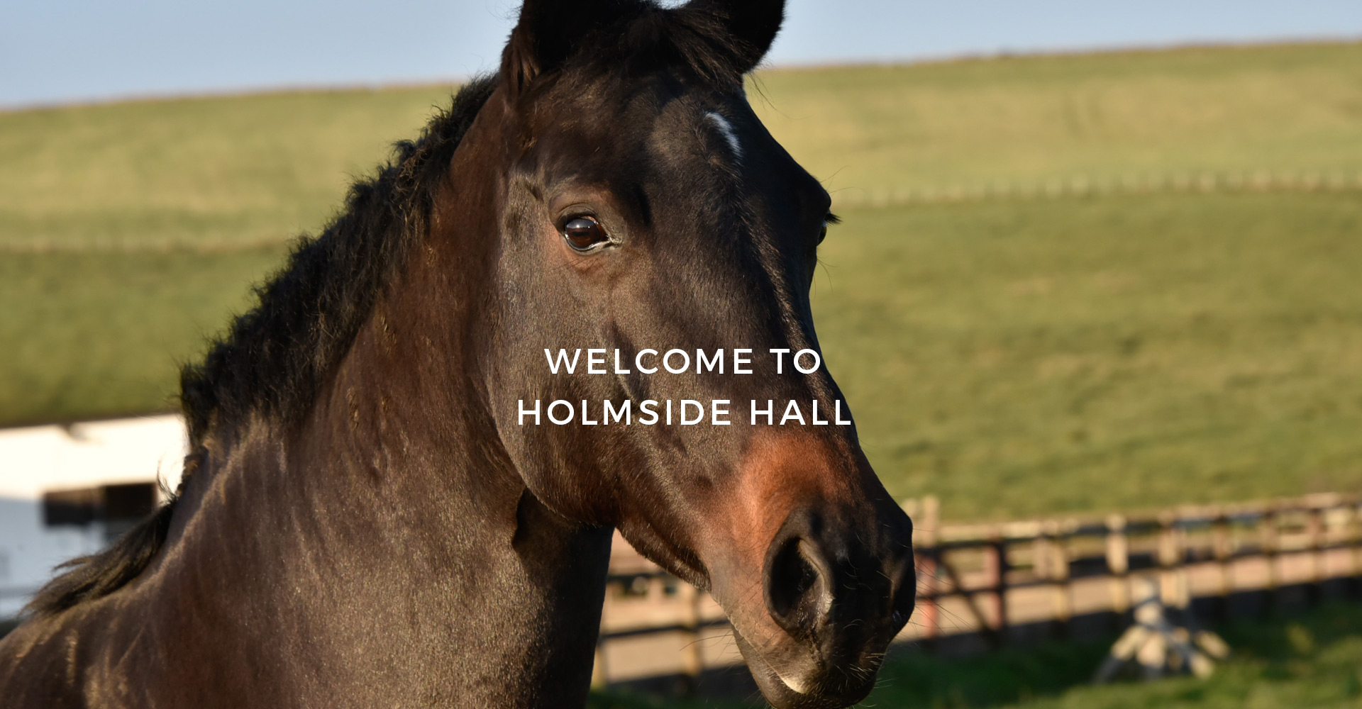 Holmside Hall Equestrian
