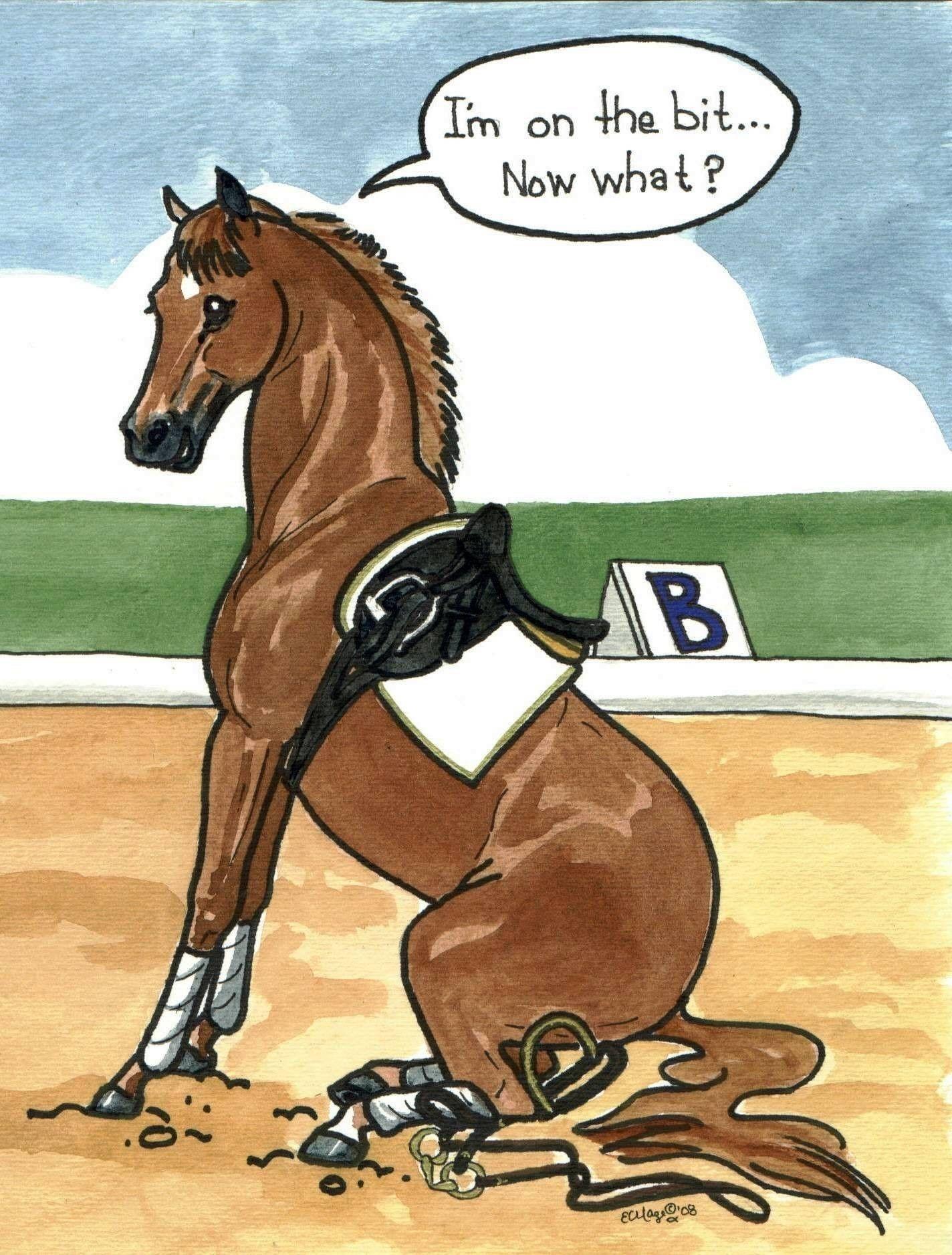 Dressage test riding
